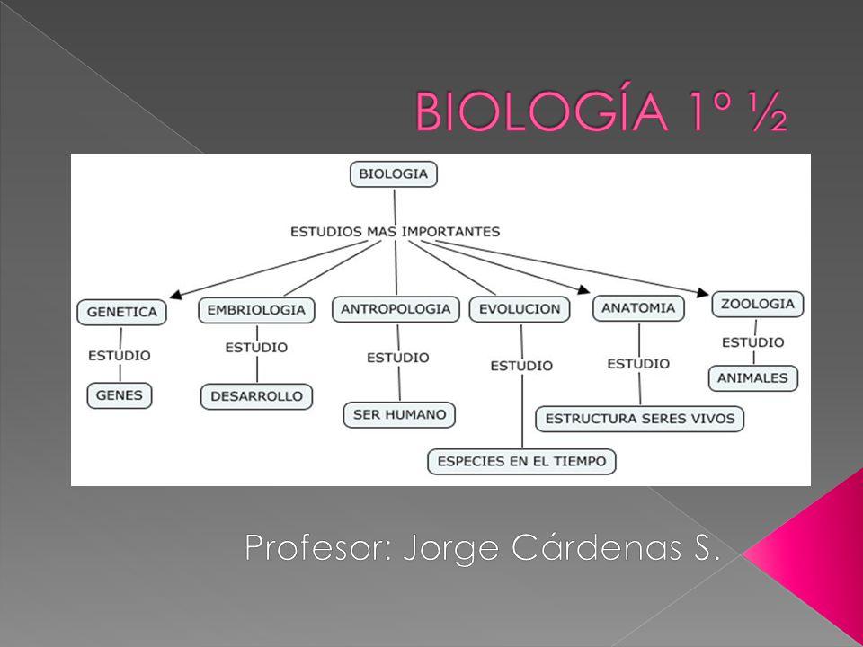 Profesor: Jorge Cárdenas S.
