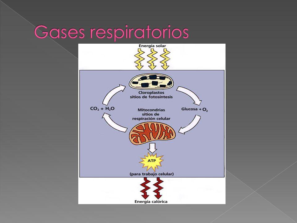 Gases respiratorios