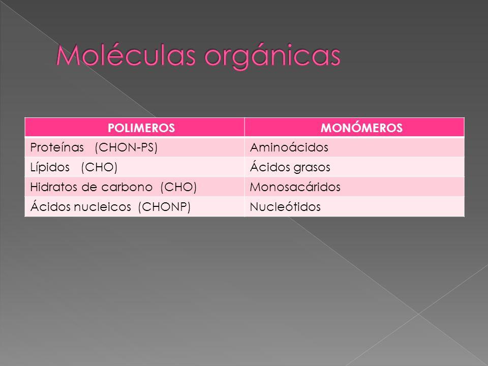 Moléculas orgánicas POLIMEROS MONÓMEROS Proteínas (CHON-PS)