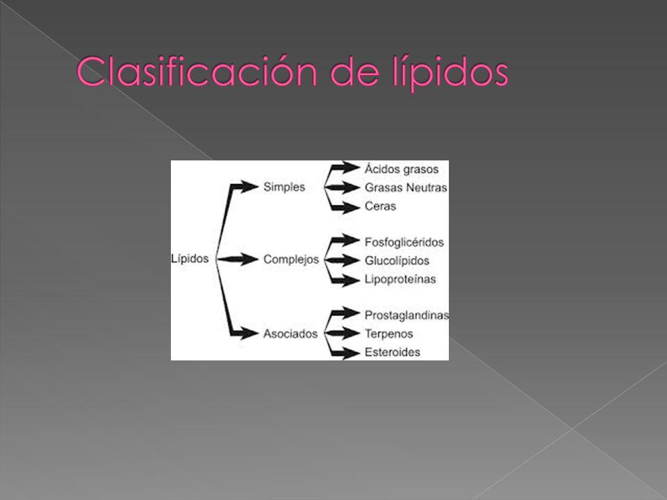 Clasificación de lípidos