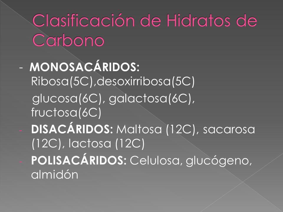Clasificación de Hidratos de Carbono