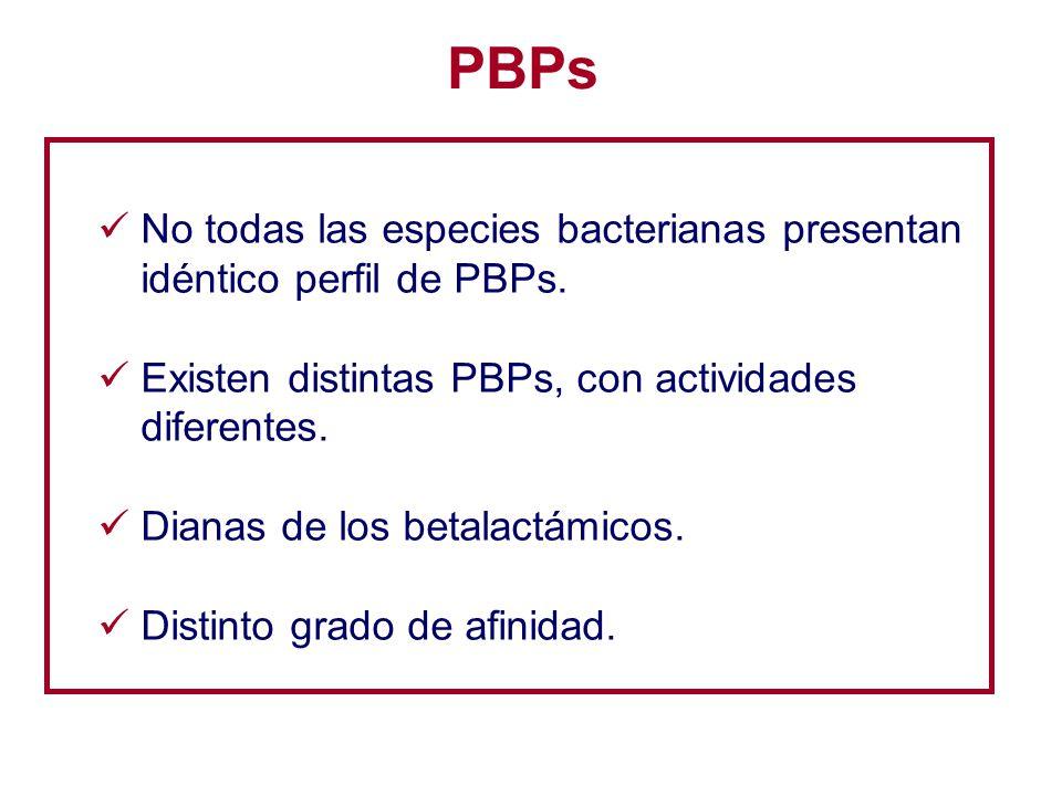 PBPs No todas las especies bacterianas presentan idéntico perfil de PBPs. Existen distintas PBPs, con actividades diferentes.