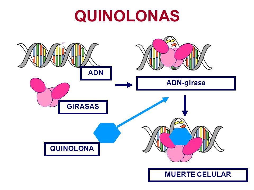QUINOLONAS ADN ADN-girasa GIRASAS QUINOLONA MUERTE CELULAR