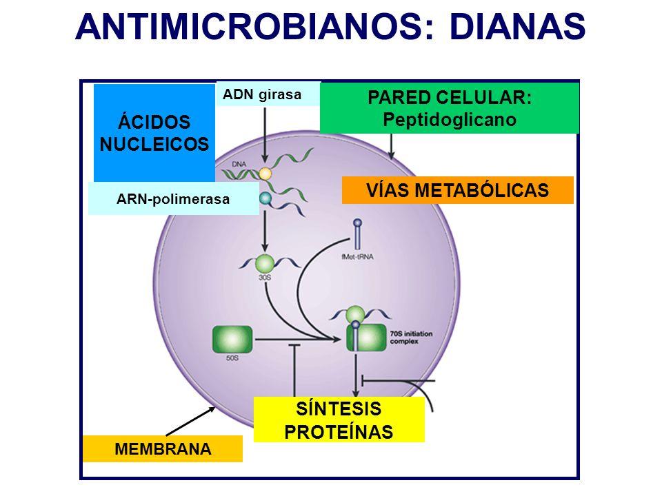 ANTIMICROBIANOS: DIANAS PARED CELULAR: Peptidoglicano