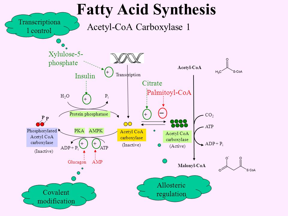 fatty acid synthase complex pdf