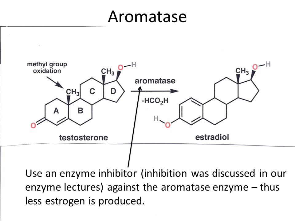 aromatase enzyme estrogen systhesis Aromatase activity a aromatase activity and the effect of estradiol and testosterone on dna synthesis in endometrial carcinoma cell lines.