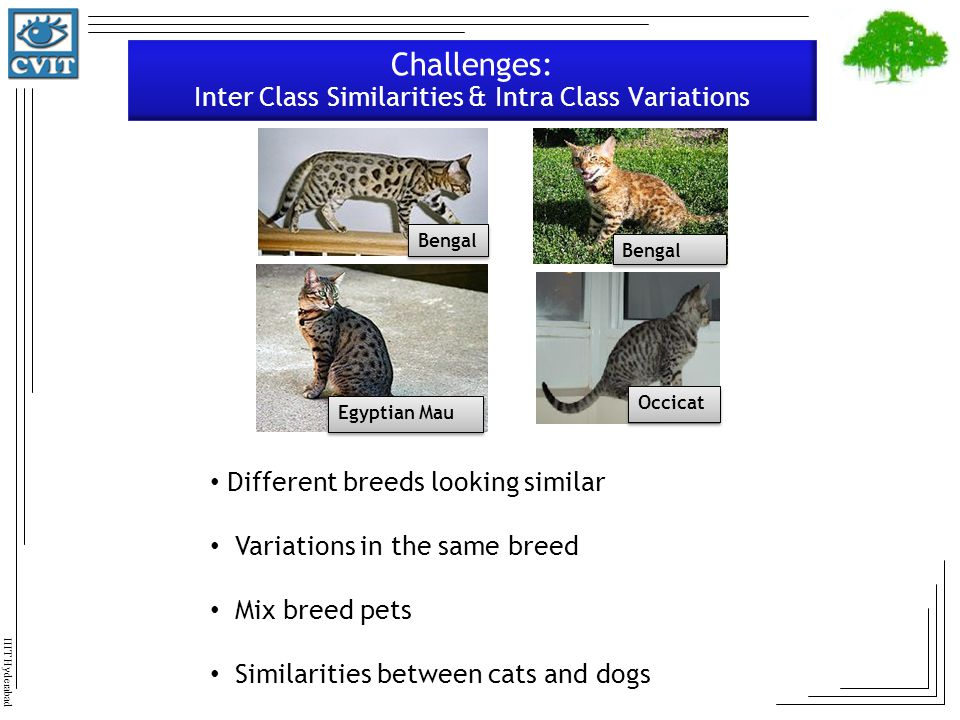 Challenges: Inter Class Similarities & Intra Class Variations