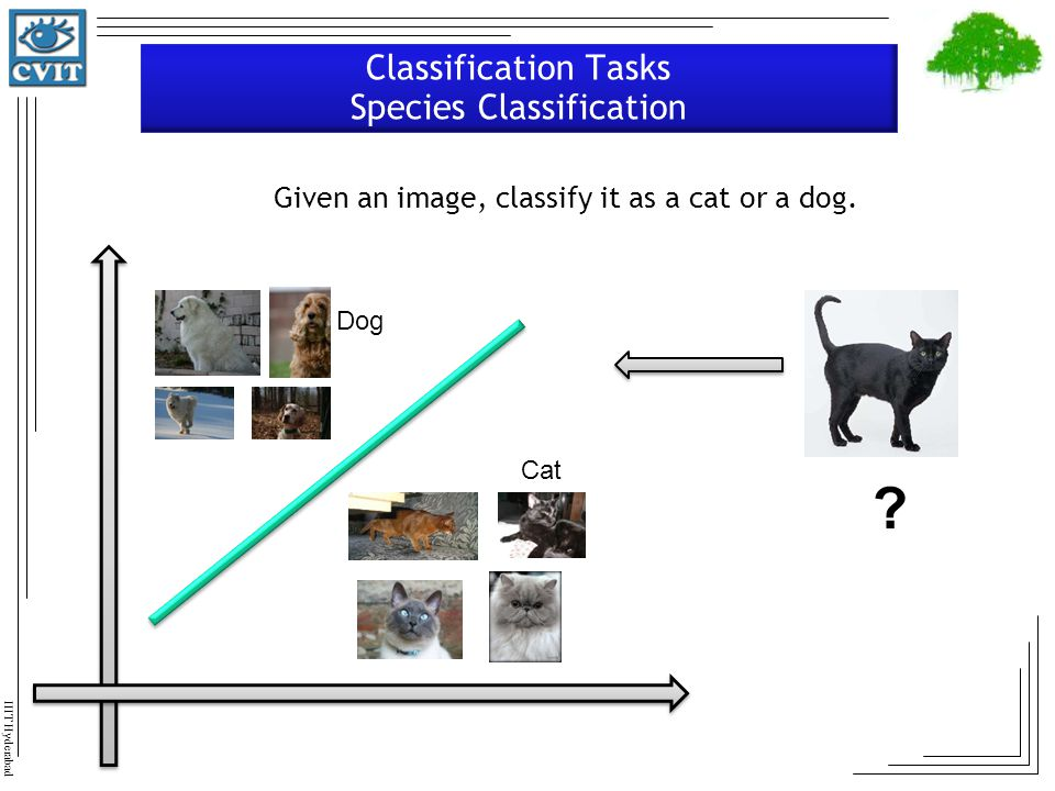Classification Tasks Species Classification