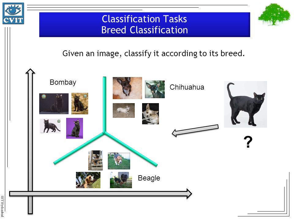 Classification Tasks Breed Classification