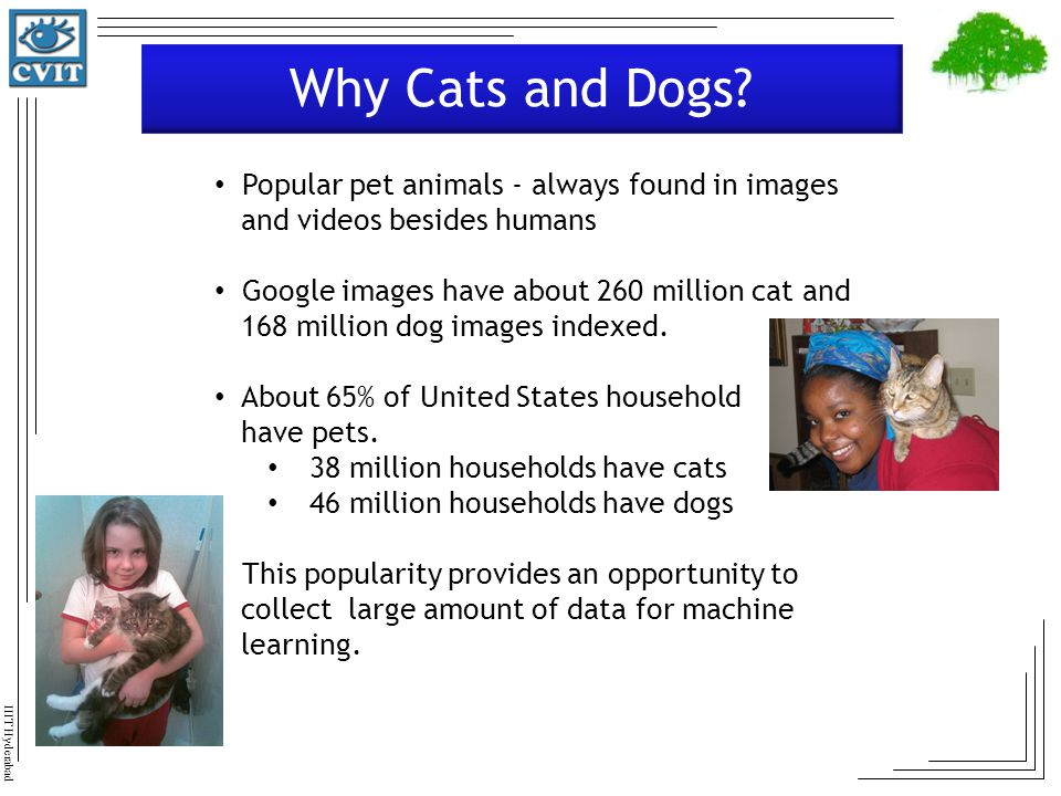 Why Cats and Dogs Popular pet animals - always found in images