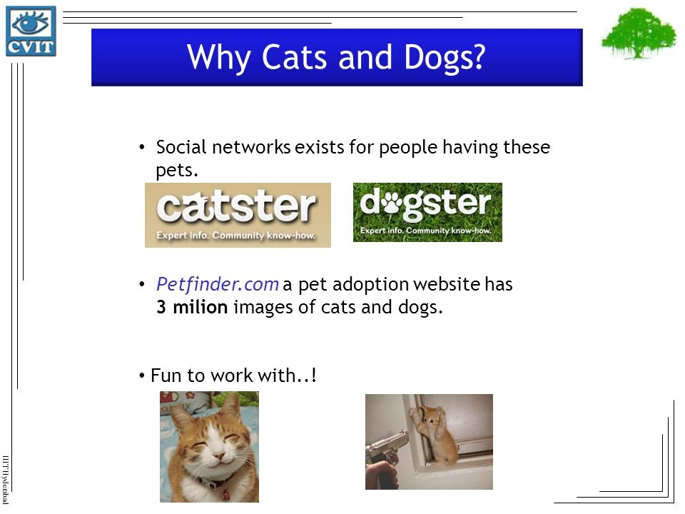 Why Cats and Dogs Social networks exists for people having these