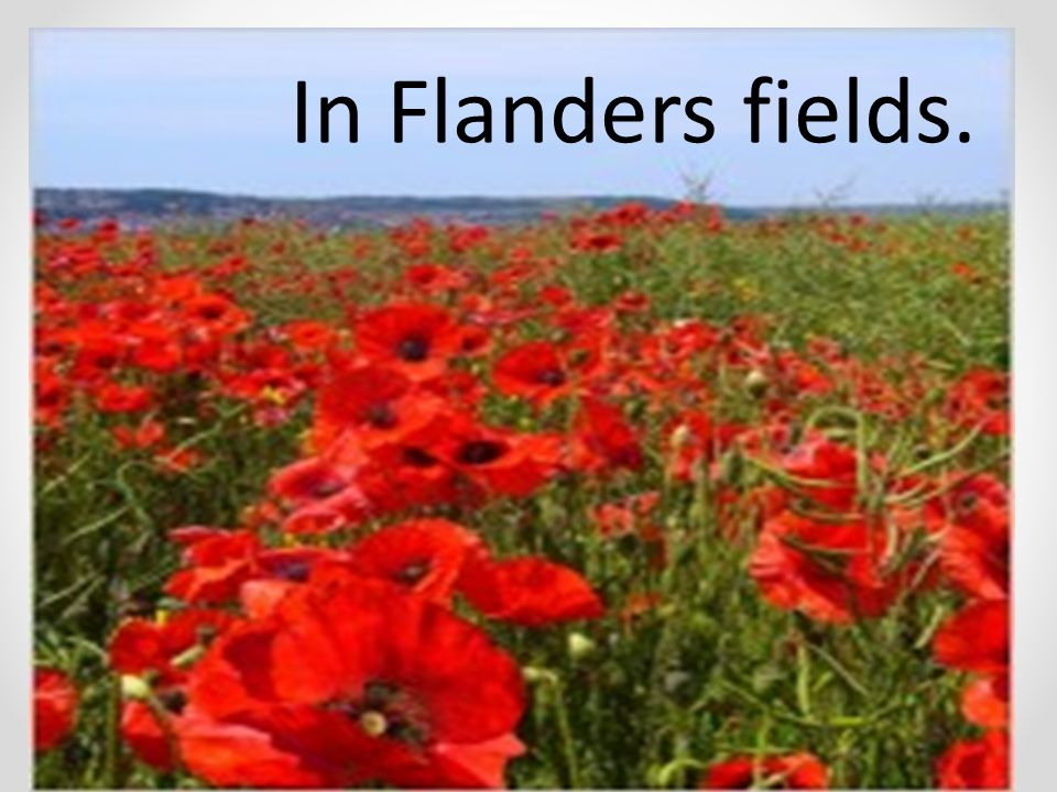 essay on flanders field The italian high renaissance is the defining movement in our art history the truth of el mozote view other pieces in the essay flanders field new essay flanders.