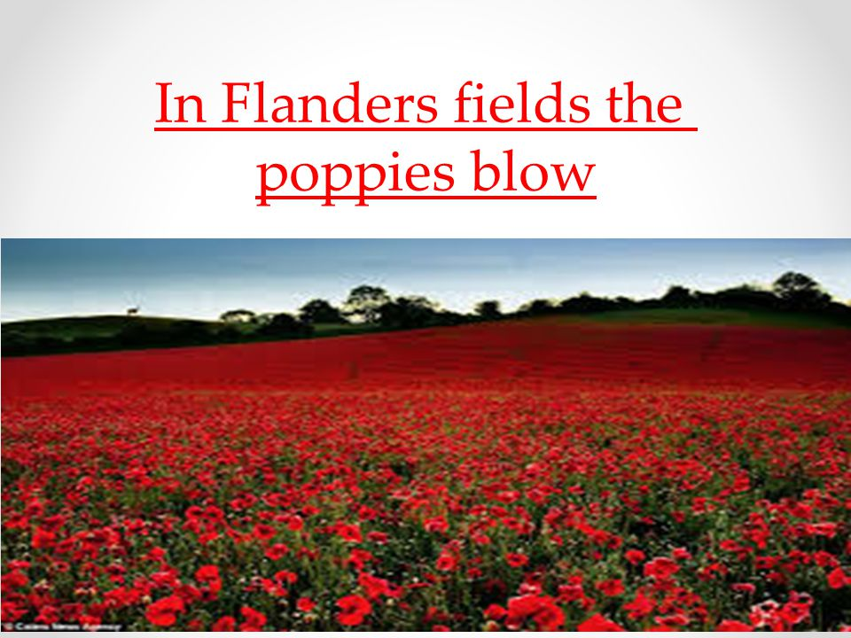 flanders fields Free essay: in flanders fieldsin flanders fields the poppies blow between the crosses, row on row,that mark our place and in the skythe larks, still bravely.