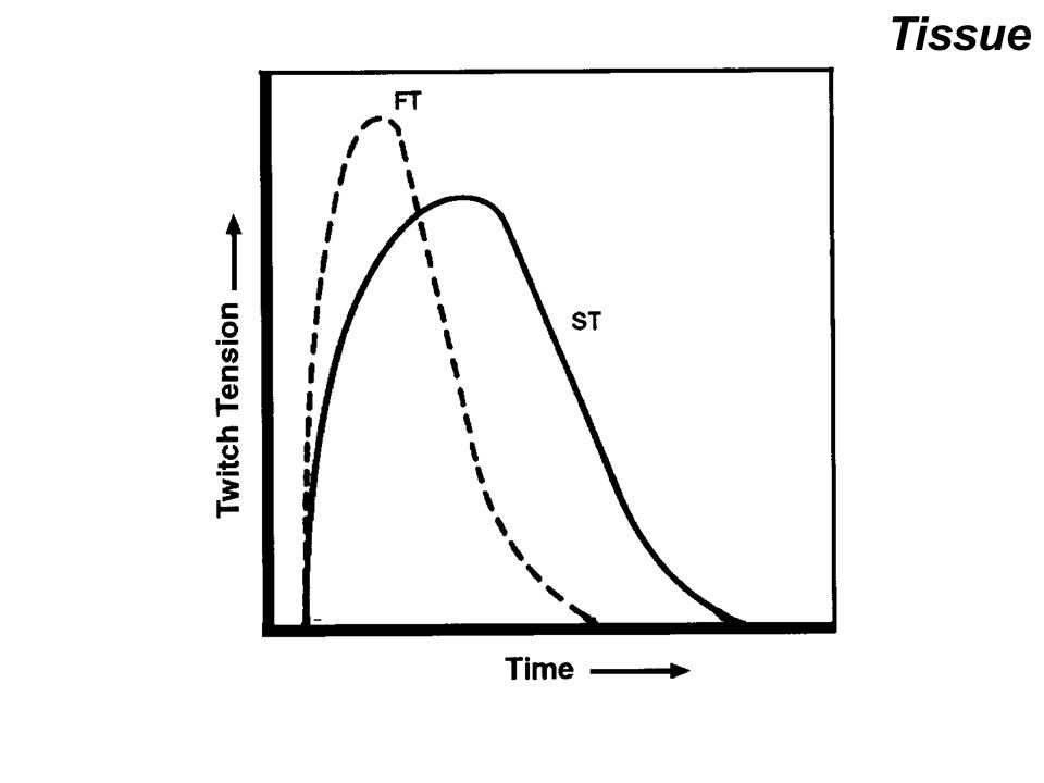 temperature and force velocity relationship of human muscles bones