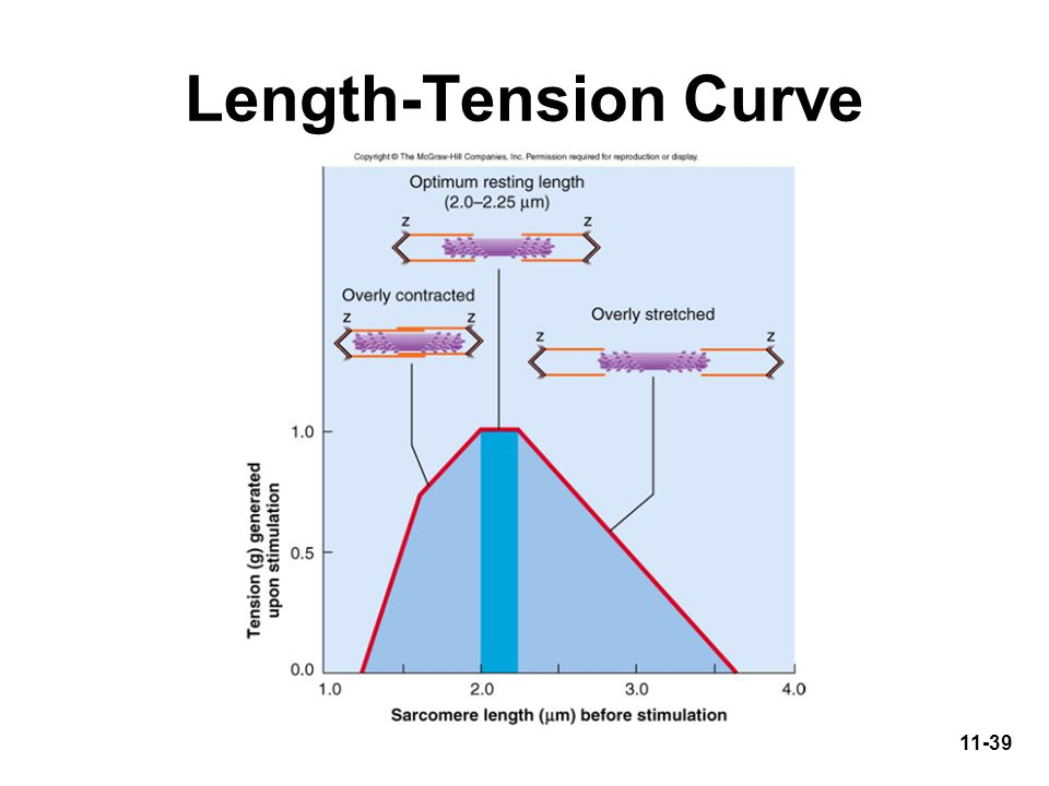 what is the length tension relationship