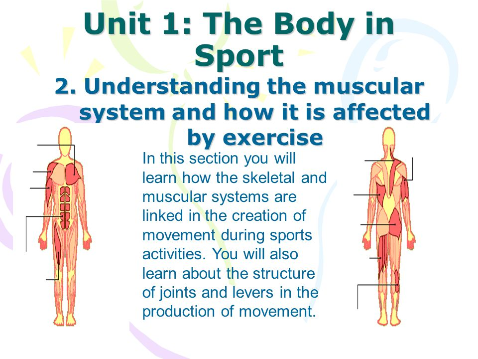 Unit 1: The Body in Sport 2. Understanding the muscular system and how it is affected by exercise.