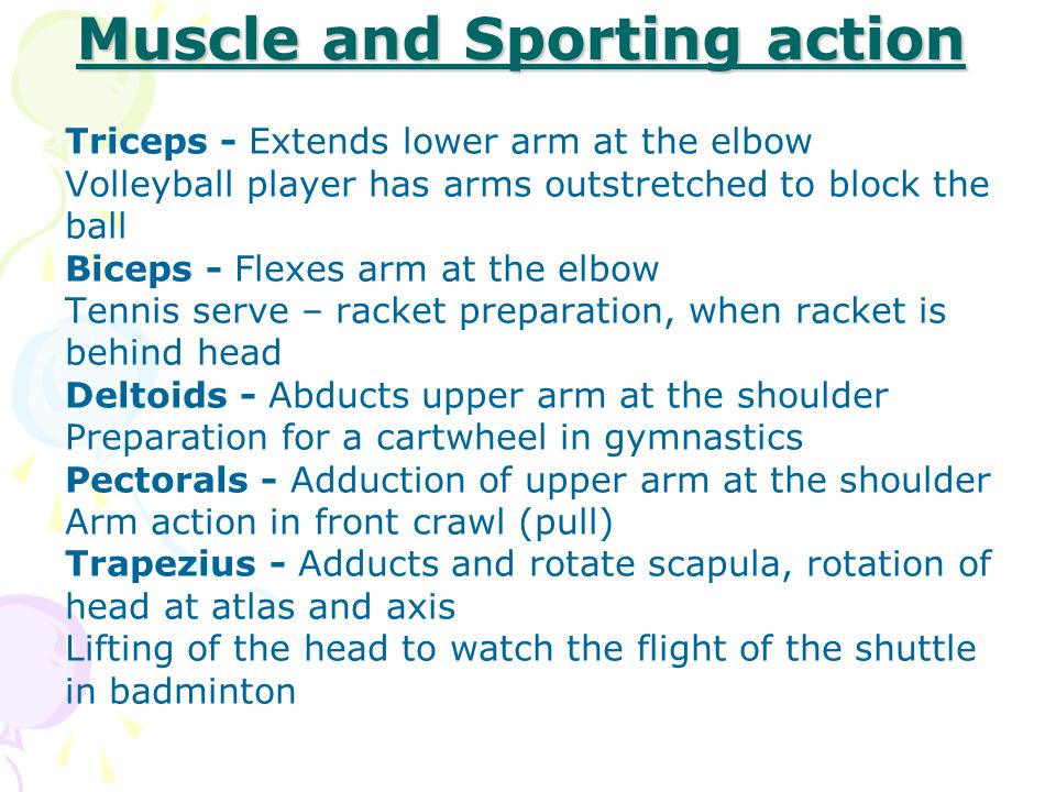 Muscle and Sporting action