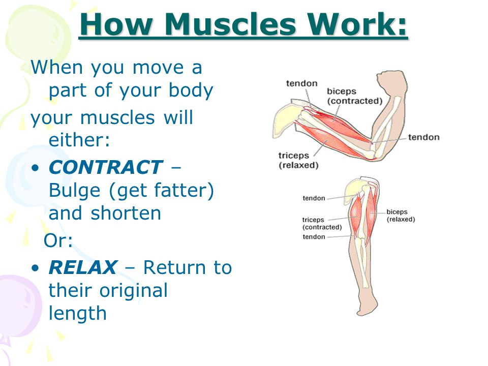 How Muscles Work: When you move a part of your body