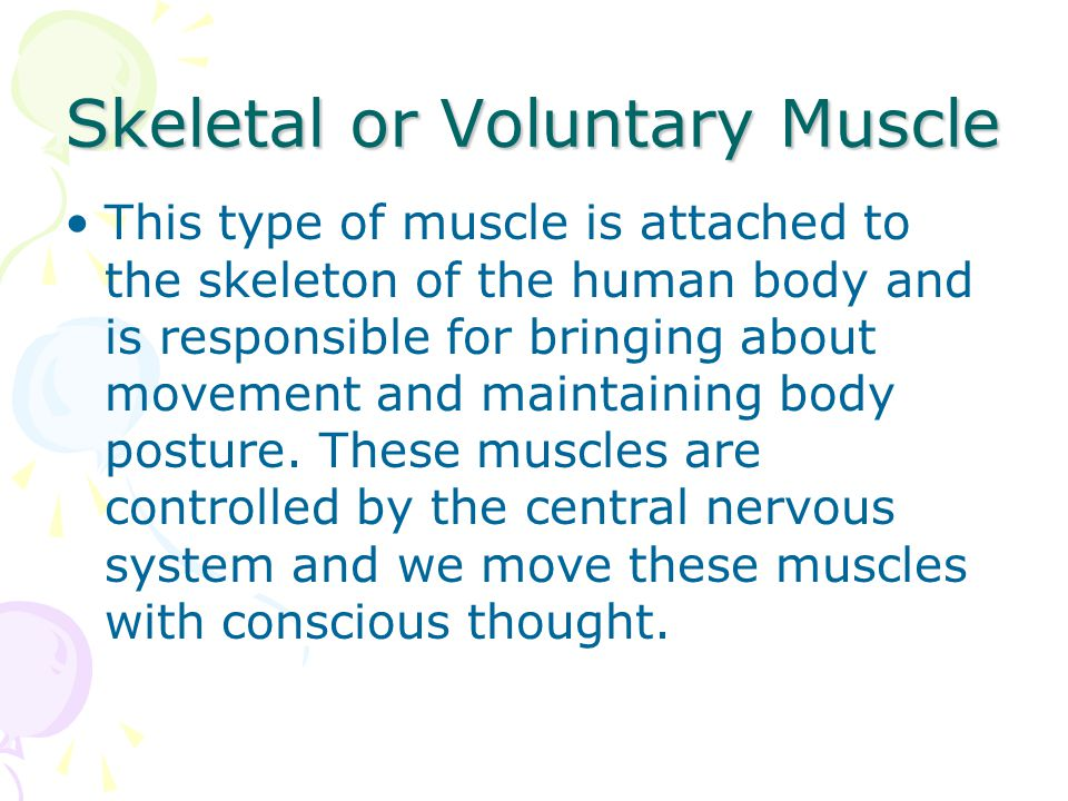 Skeletal or Voluntary Muscle
