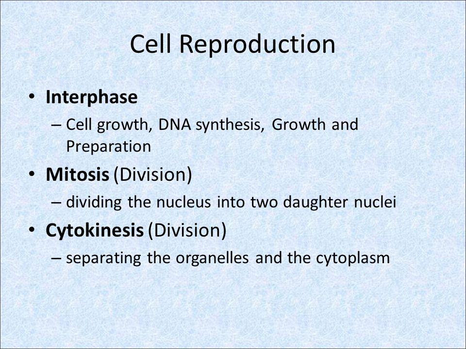 Mitosis And Cytokinesis Ppt Video Online Download
