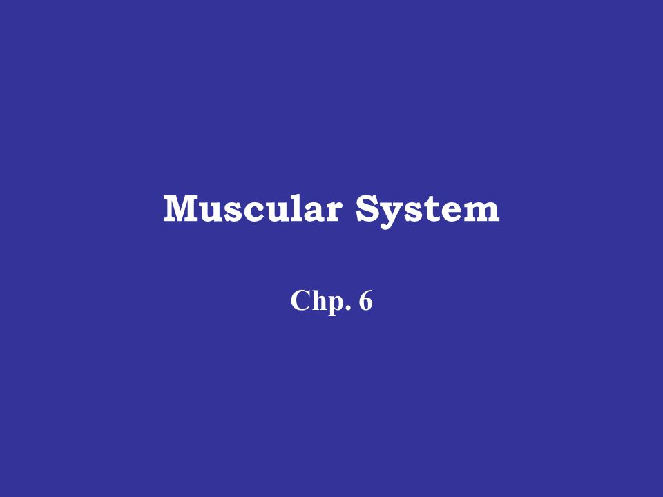 Muscular System Chp. 6
