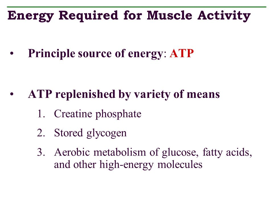 Energy Required for Muscle Activity
