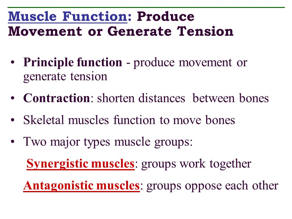 Muscle Function: Produce Movement or Generate Tension