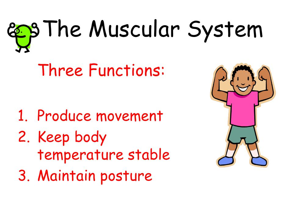 the muscular system three functions: produce movement - ppt video, Human Body