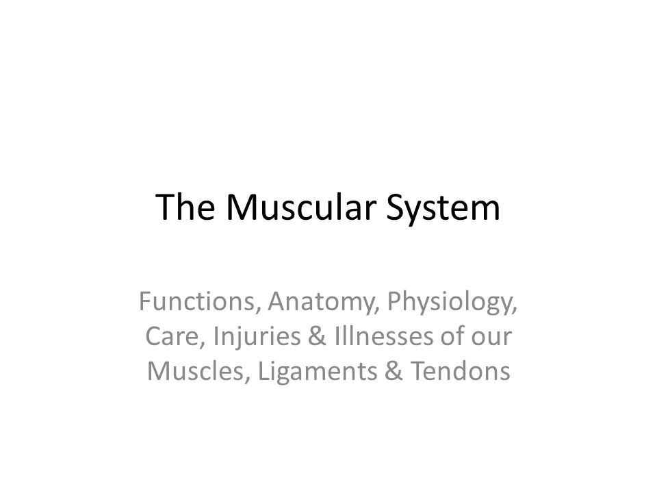 The Muscular System Functions, Anatomy, Physiology, Care, Injuries ...