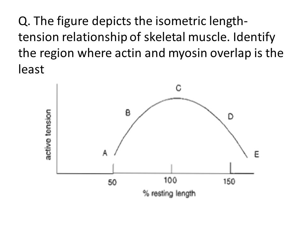 length tension relationship of smooth muscle ab
