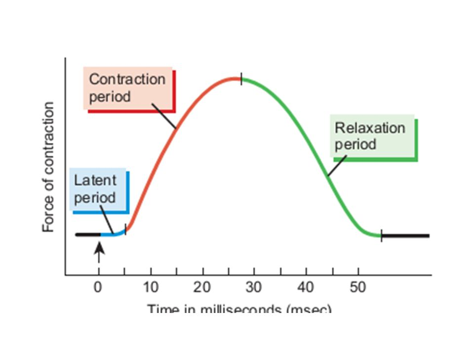relationship between stimulus voltage and force development