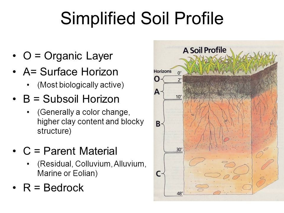 Envirothon soils dennis brezina ppt video online download for Soil profile video