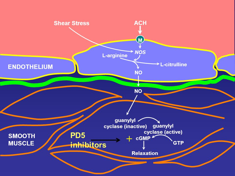 the role of nitric oxide in cellular aging ppt video