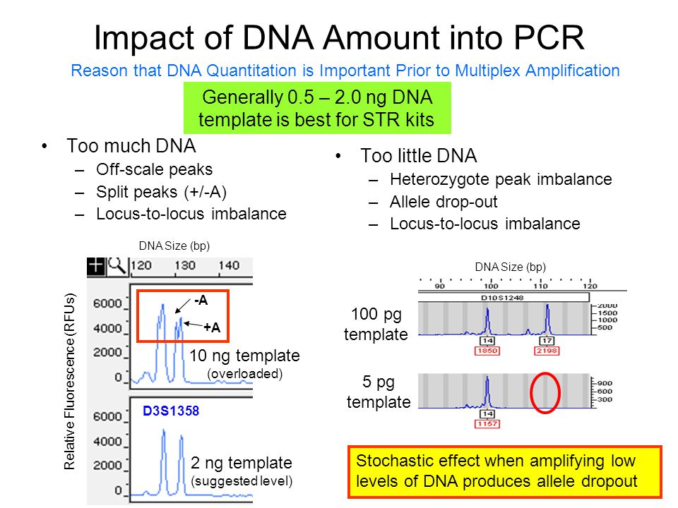 Fundamentals of forensic dna typing ppt download for Pcr template amount