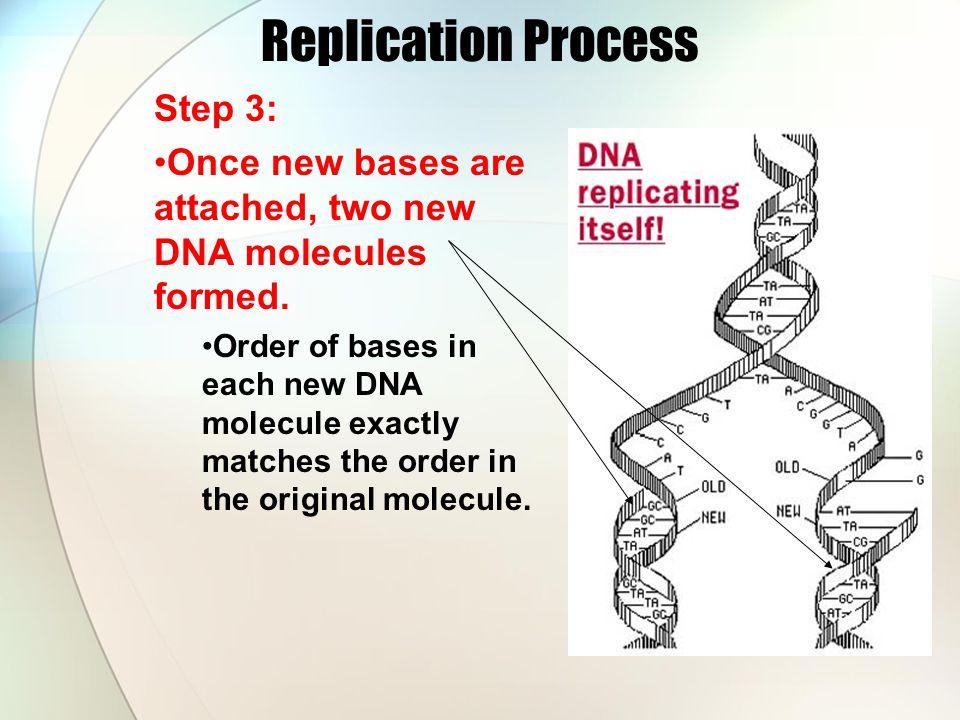 Dna replication steps worksheet
