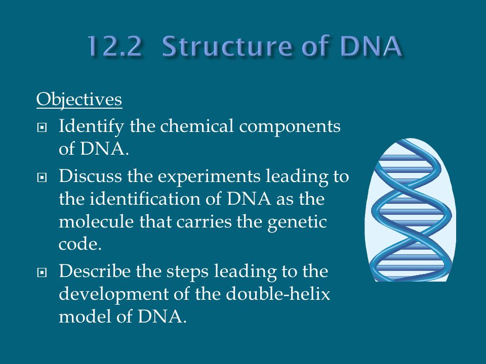 Chapter 12 dna the blueprint of life ppt download 122 structure of dna objectives malvernweather Images