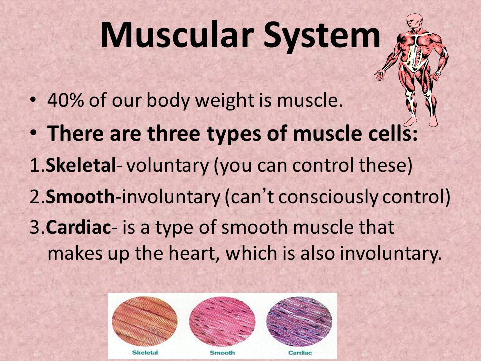 human body systems booklet - ppt video online download, Muscles