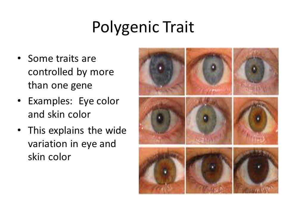 Polygenic Trait 44307 Movieweb