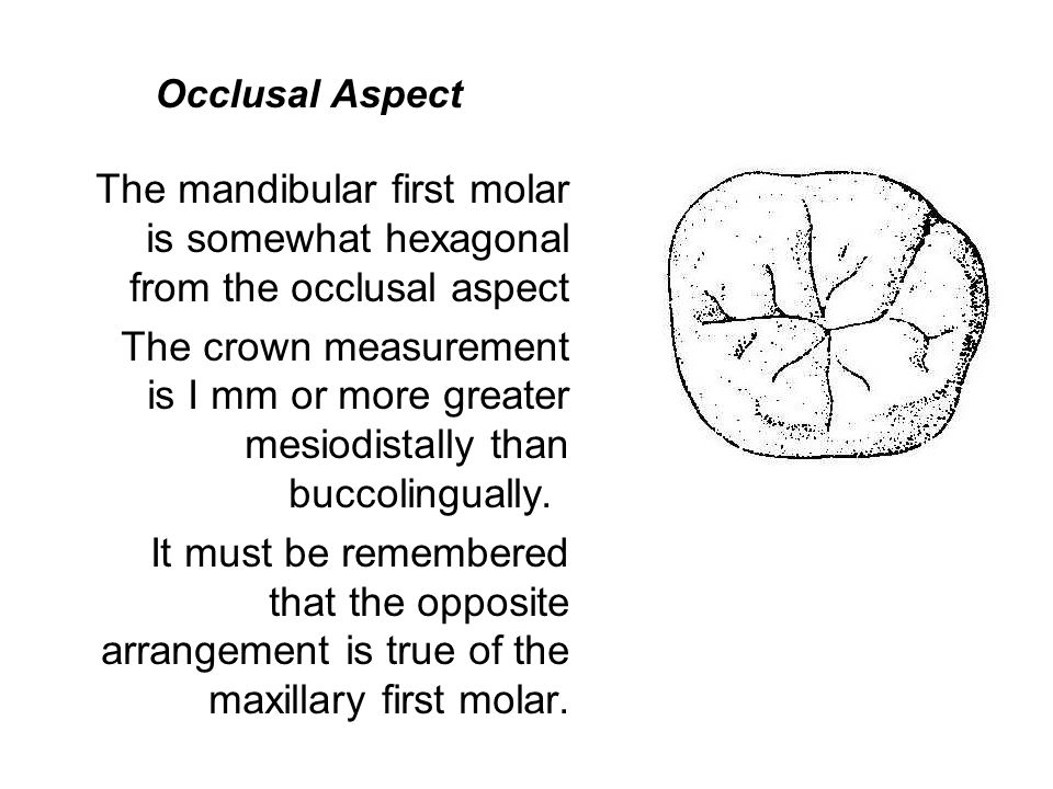 Occlusal Aspect The mandibular first molar is somewhat hexagonal ...