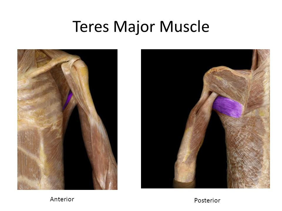 Teres Major Muscle Anterior Posterior