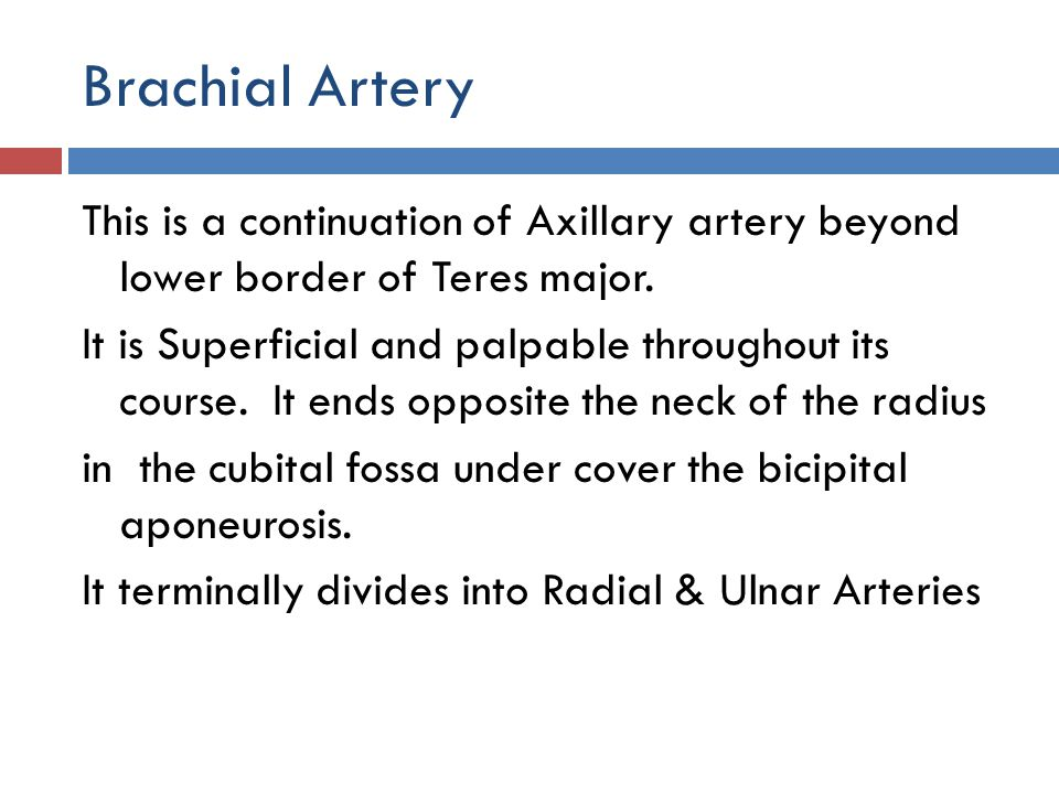 Brachial Artery This is a continuation of Axillary artery beyond lower border of Teres major.