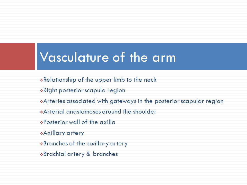 Vasculature of the arm Relationship of the upper limb to the neck