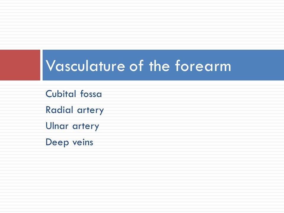 Vasculature of the forearm