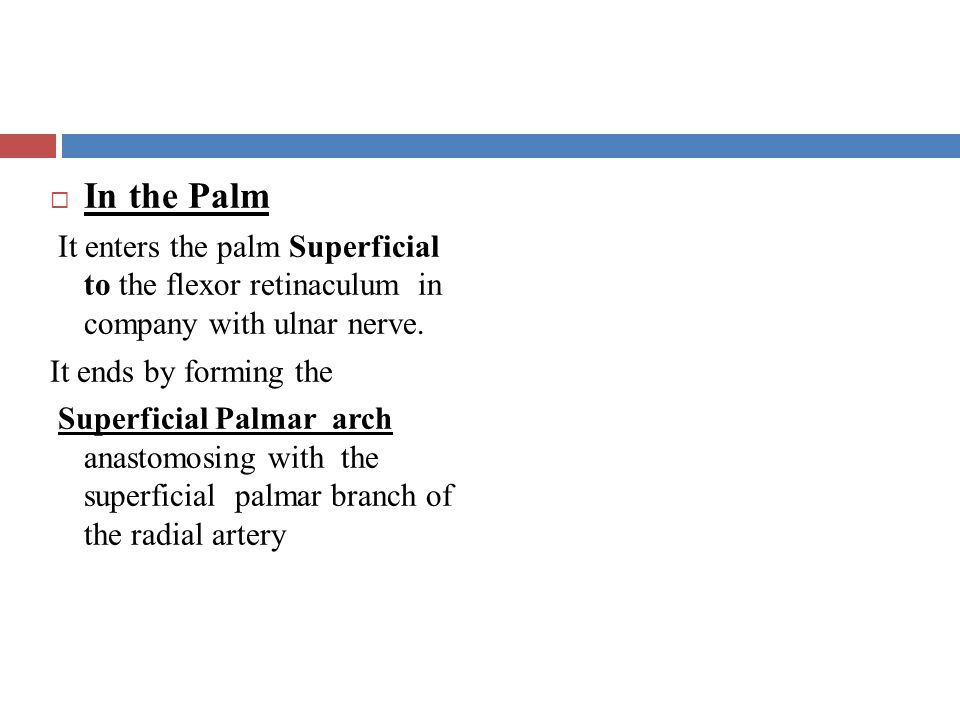 In the Palm It enters the palm Superficial to the flexor retinaculum in company with ulnar nerve.