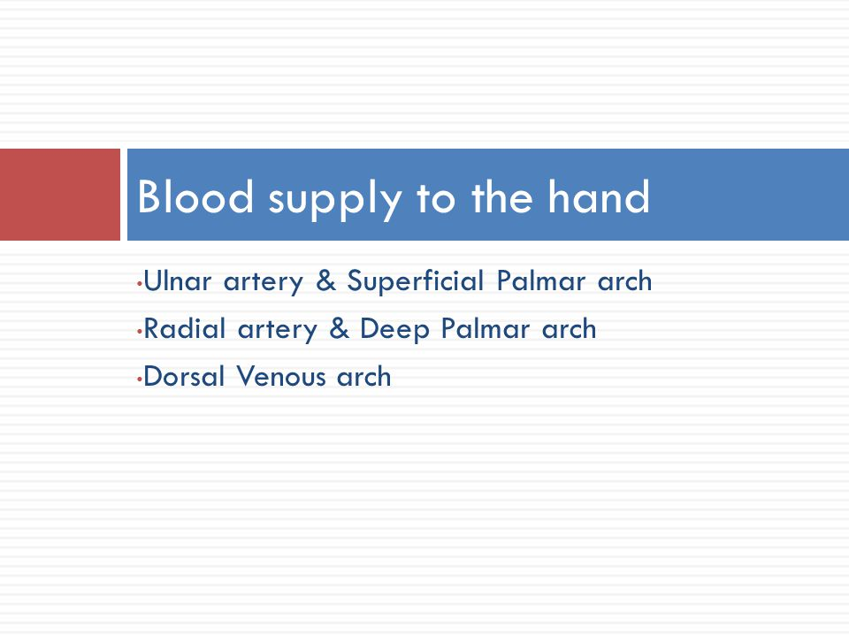 Blood supply to the hand