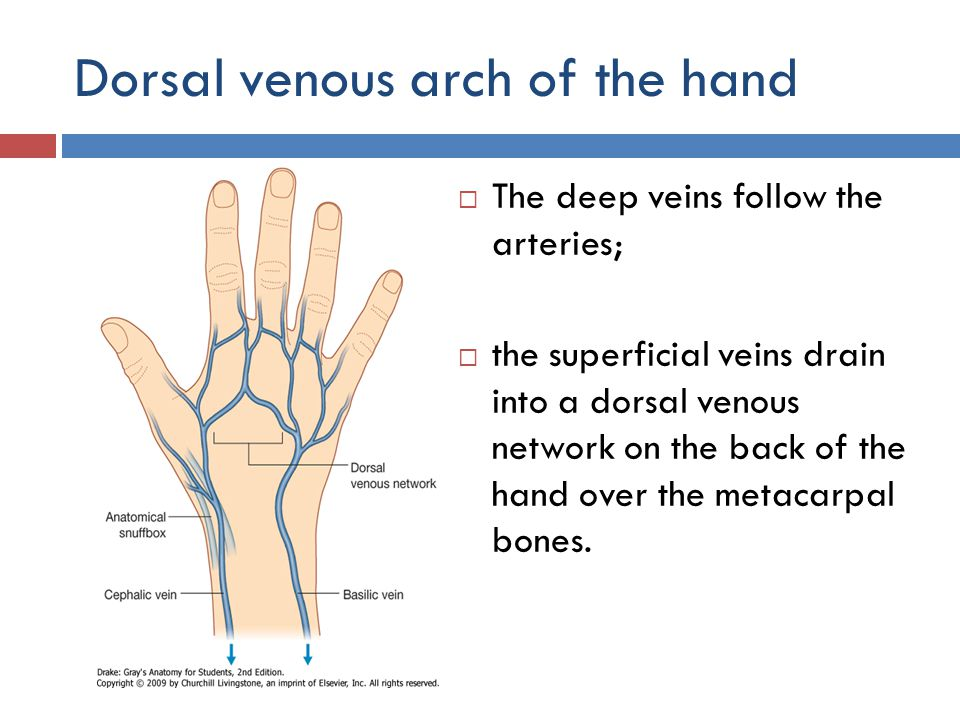 Dorsal venous arch of the hand