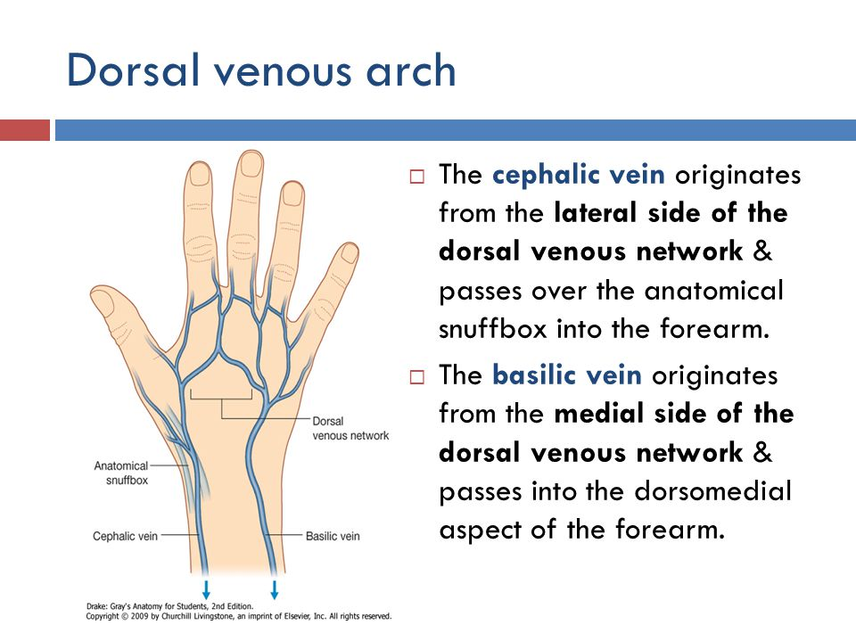 windsor university school of medicine - ppt download, Cephalic Vein