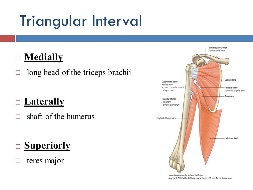 Triangular Interval Medially long head of the triceps brachii