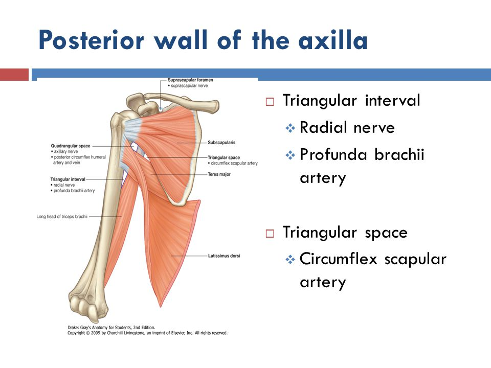 Posterior wall of the axilla