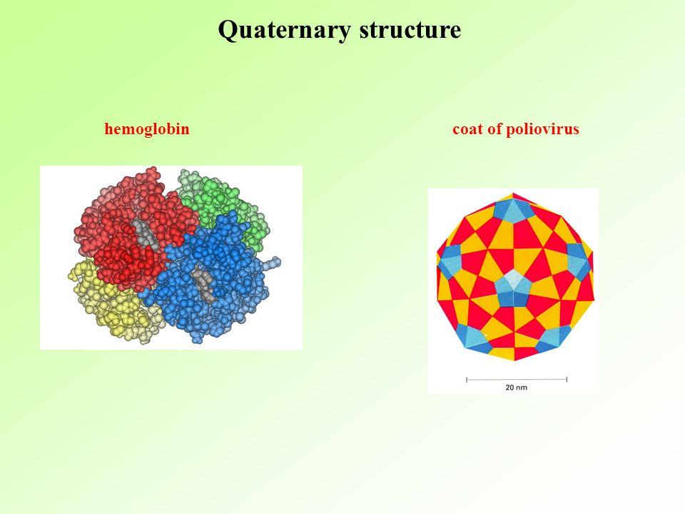 Quaternary structure hemoglobin coat of poliovirus coat of poliovirus